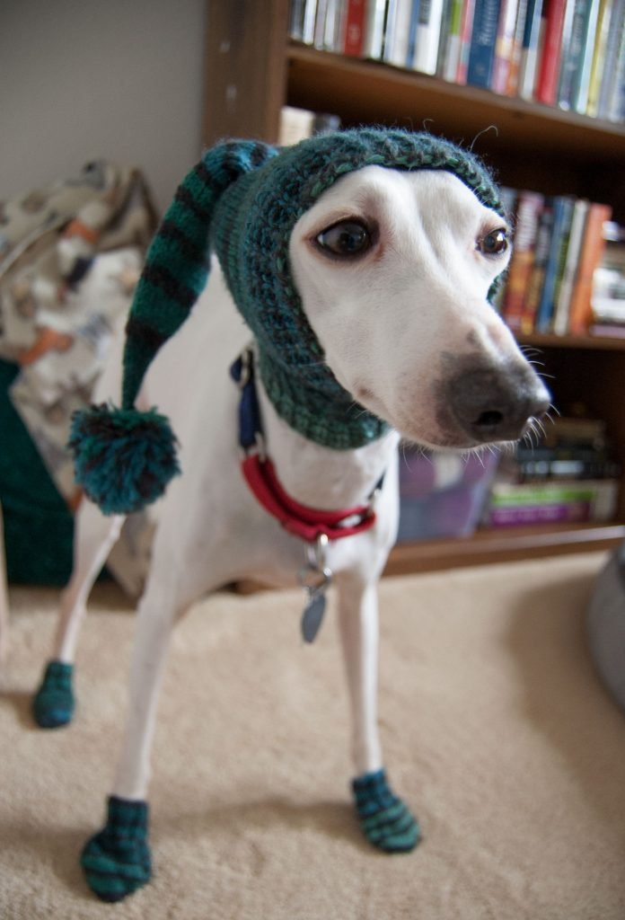 Patons kroy sock yarn knit socks for italian greyhound